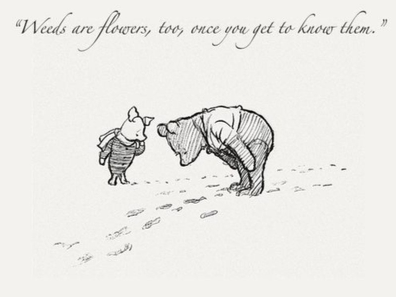 Lessons in Mindfulness from the Tao of Pooh